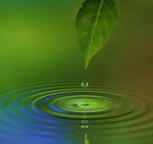Locations/Fees. Library Image: Leaf and Water